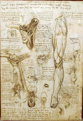 History of Leonardo da Vinci drawings